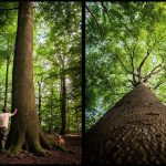 zld mycoloristhegreen welcometothewood welovethetrees wood forest tree vanlife travel germany